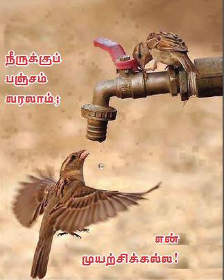 bird_water